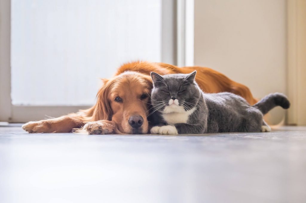 72% of renters own a pet
