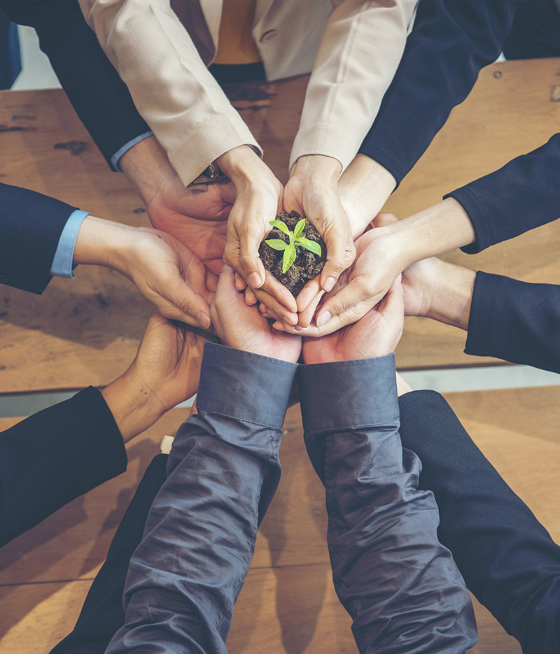 The All American Realty Team: a bunch of hands holding a plant